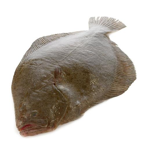 Les poissons du banc des saveurs - Le Barbue