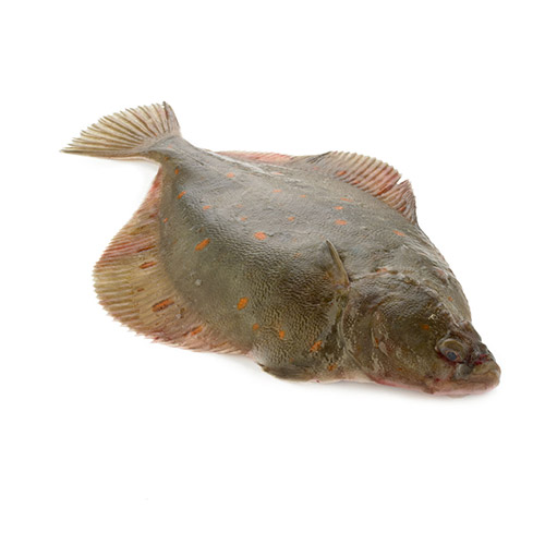 Les poissons du banc des saveurs - La plie