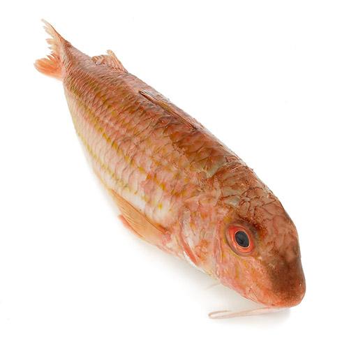 Les poissons du banc des saveurs - Le rouget-barbet